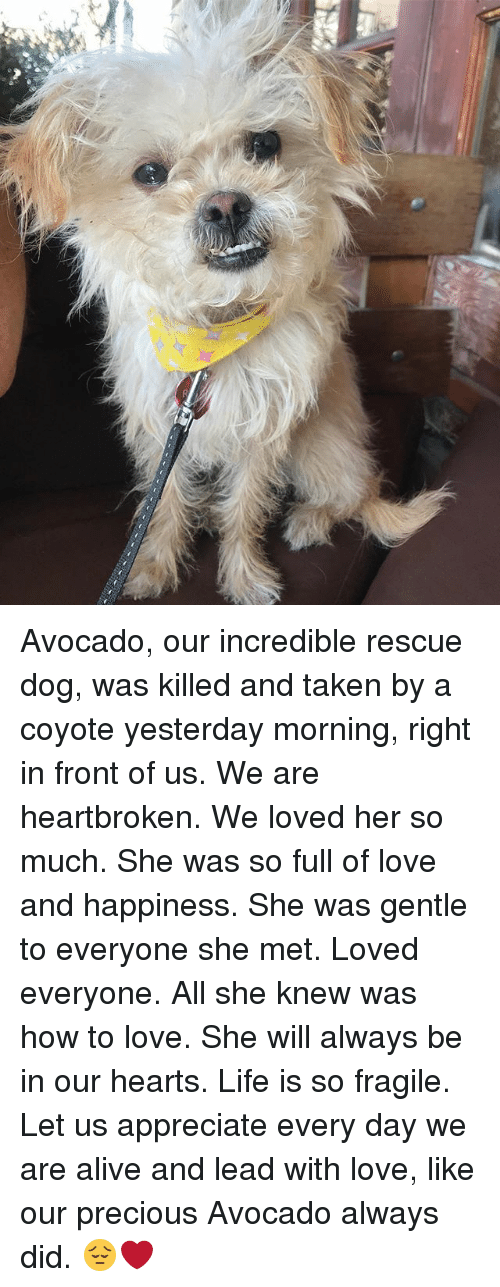 Alive, Life, and Love: Avocado, our incredible rescue dog, was killed and taken by a coyote yesterday morning, right in front of us. We are heartbroken. We loved her so much. She was so full of love and happiness. She was gentle to everyone she met. Loved everyone. All she knew was how to love. She will always be in our hearts. Life is so fragile. Let us appreciate every day we are alive and lead with love, like our precious Avocado always did. 😔❤️