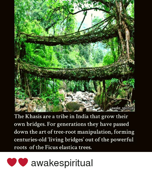 Memes, India, and Tree: awake spiritua  The Khasis are a tribe in India that grow their  own bridges. For generations they have passed  down the art of tree-root manipulation, forming  centuries-old 'living bridges' out of the powerful  roots of the Ficus elastica trees. ❤❤ awakespiritual