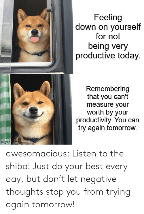 Tumblr, Best, and Blog: awesomacious:  Listen to the shiba! Just do your best every day, but don't let negative thoughts stop you from trying again tomorrow!