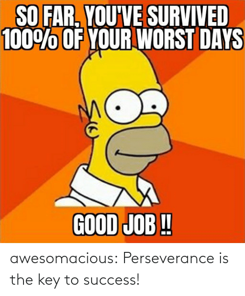 Tumblr, Blog, and Perseverance: awesomacious:  Perseverance is the key to success!