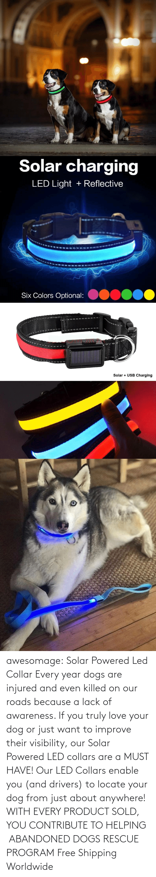 Dogs, Love, and Tumblr: awesomage: Solar Powered Led Collar   Every year dogs are injured and even killed on our roads because a lack of awareness. If you truly love your dog or just want to improve their visibility, our Solar Powered LED collars are a MUST HAVE!   Our LED Collars enable you (and drivers) to locate your dog from just about anywhere!     WITH EVERY PRODUCT SOLD, YOU CONTRIBUTE TO HELPING ABANDONED DOGS RESCUE PROGRAM     Free Shipping Worldwide