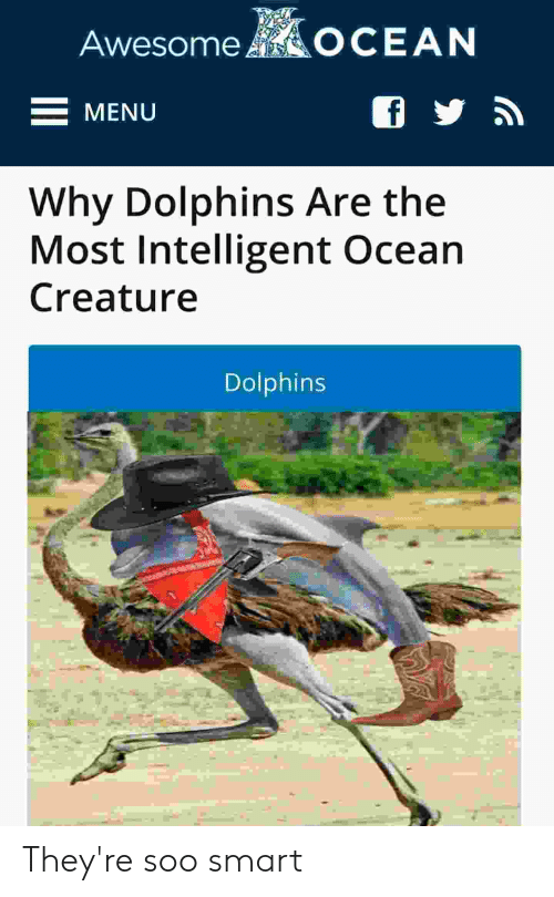 Dolphins, Ocean, and Creature: AwesomeOCEAN  MENU  Why Dolphins Are the  Most Intelligent Ocean  Creature  Dolphins They're soo smart