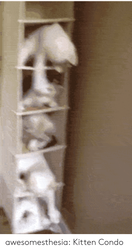 Tumblr, Blog, and Com: awesomesthesia:  Kitten Condo