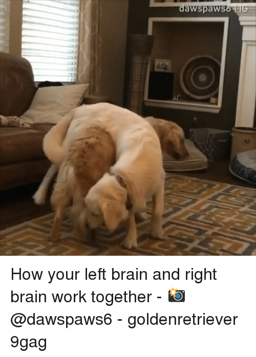 9gag, Memes, and Work: awspaws How your left brain and right brain work together - 📸@dawspaws6 - goldenretriever 9gag