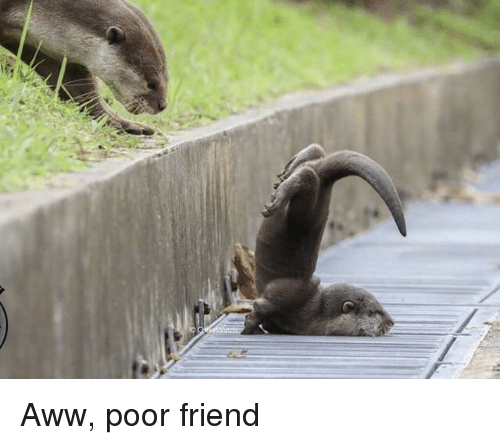 Aww, Friend, and Poor