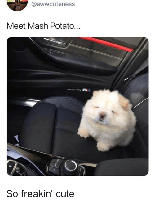 Cute, Dank, and Potato: @awwcuteness  Meet Mash Potato... So freakin' cute