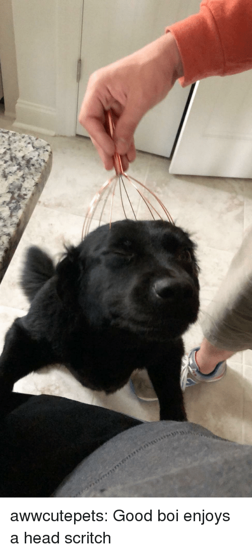 Head, Tumblr, and Blog: awwcutepets:  Good boi enjoys a head scritch