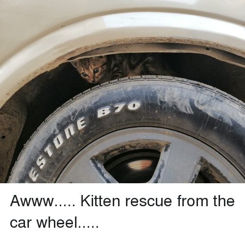 Awww, Car, and Kitten