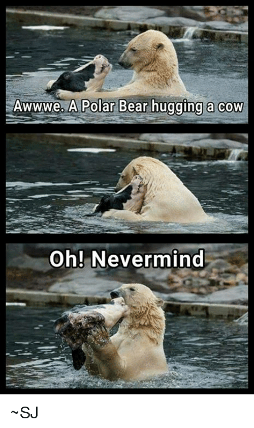 awwwe-a-polar-bear-hugging-a-cow-oh-nevermind-~sj-28045398.png
