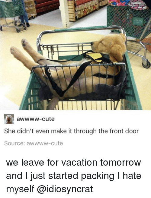 Cute, Memes, and Tomorrow: awwww-cute  She didn't even make it through the front door  Source: awwww-cute we leave for vacation tomorrow and I just started packing I hate myself @idiosyncrat