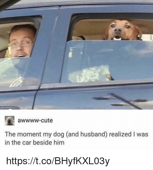 Cute, Memes, and Husband: awwww-cute  The moment my dog (and husband) realized I was  in the car beside him https://t.co/BHyfKXL03y