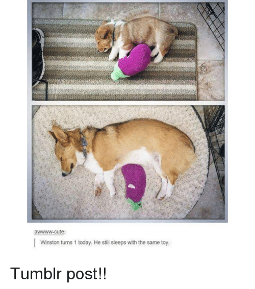 Cute, Memes, and Tumblr: awwww-cute:  Winston turns 1 today. He still sleeps with the same toy. Tumblr post!!