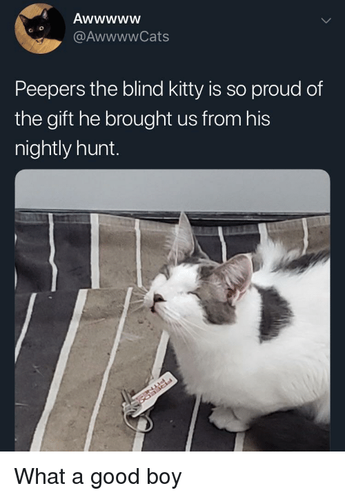 Good, The Gift, and Proud: @AwwwwCats  Peepers the blind kitty is so proud of  the gift he brought us from hi:s  nightly hunt. What a good boy