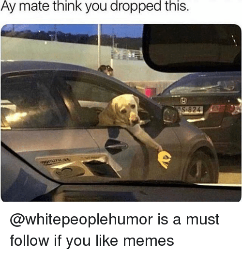 Memes, 🤖, and Think: Ay  mate  think  you  dropped  this. @whitepeoplehumor is a must follow if you like memes