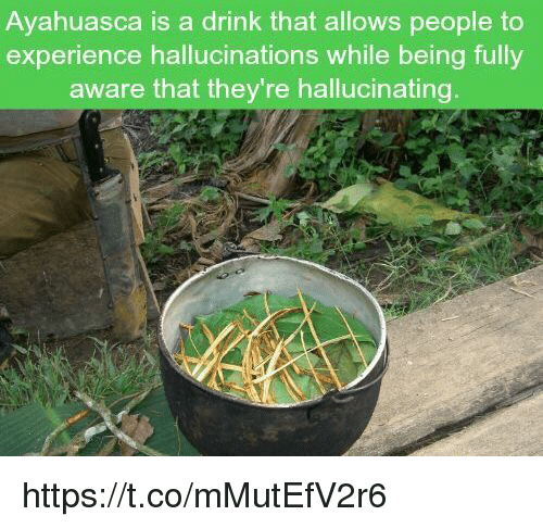 Ayahuasca Is a Drink That Allows People to Experience Hallucinations