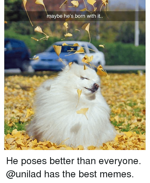 Funny, Memes, and Best: aybe he's born with it He poses better than everyone. @unilad has the best memes.