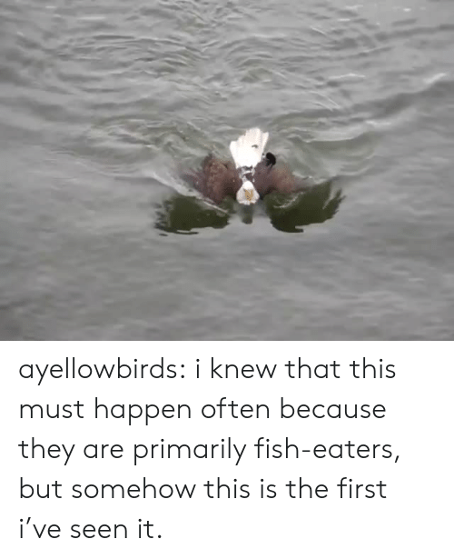 Target, Tumblr, and Blog: ayellowbirds: i knew that this must happen often because they are primarily fish-eaters, but somehow this is the first i've seen it.