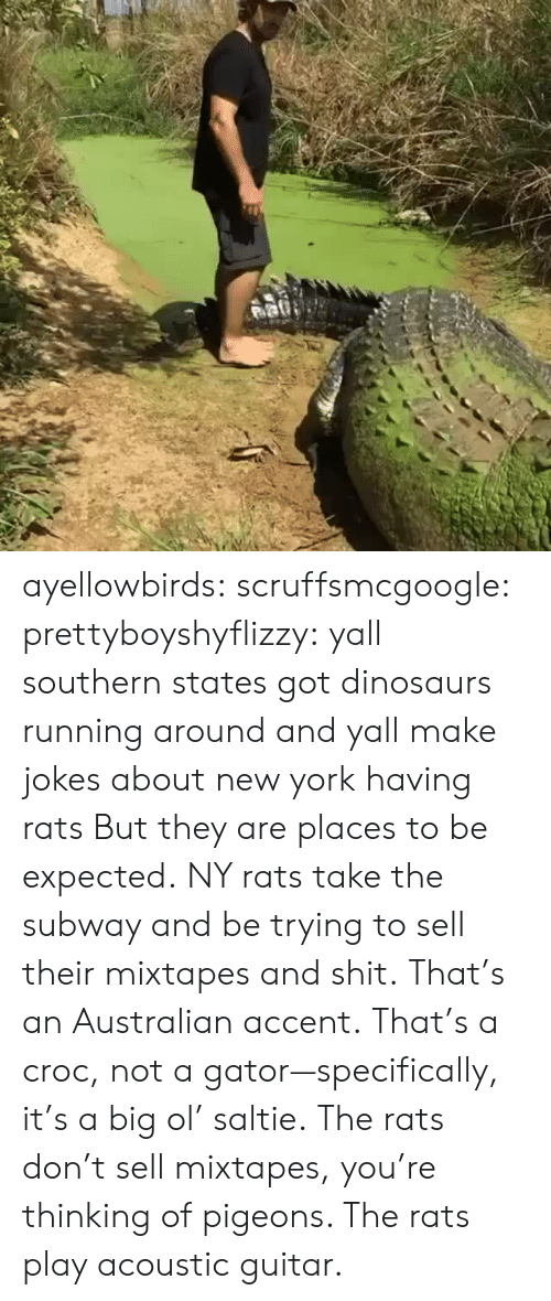 Mixtapes, New York, and Shit: ayellowbirds: scruffsmcgoogle:  prettyboyshyflizzy: yall southern states got dinosaurs running around and yall make jokes about new york having rats  But they are places to be expected. NY rats take  the subway and be trying to sell their mixtapes and shit.  That's an Australian accent. That's a croc, not a gator—specifically, it's a big ol' saltie. The rats don't sell mixtapes, you're thinking of pigeons. The rats play acoustic guitar.