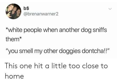 """Smell, White People, and Home: b$  @brenanwarner2  """"white people when another dog sniffs  them*  """"you smell my other doggies dontcha!!"""" This one hit a little too close to home"""