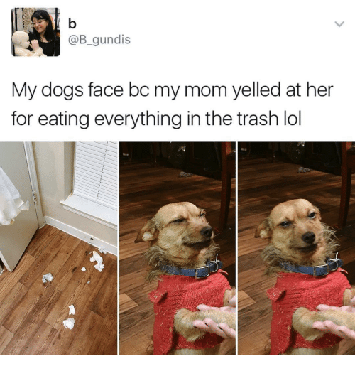 Funny, Trash, and Yelle: @B gundis  My dogs face bc my mom yelled at her  for eating everything in the trash lol