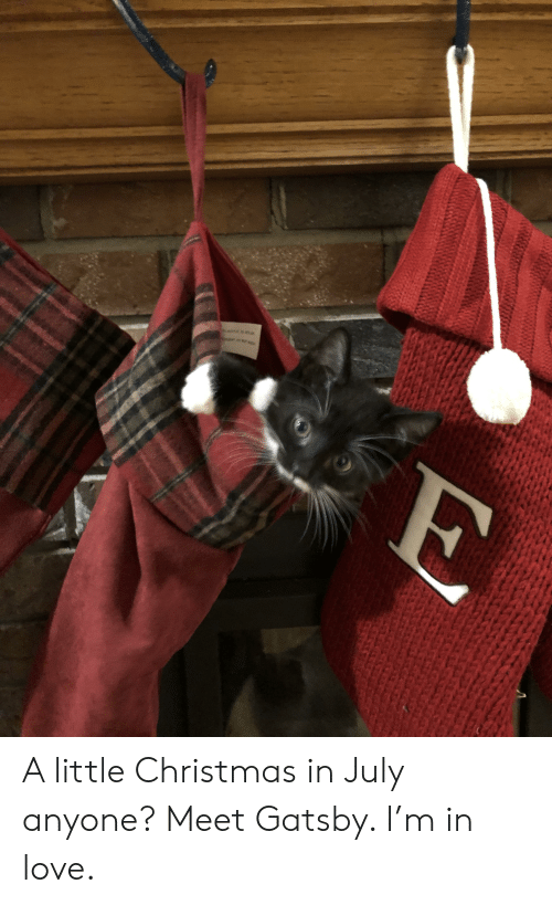 Christmas In July Cat Meme.B M A Little Christmas In July Anyone Meet Gatsby I M In