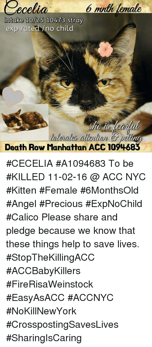 B Muth Lemale Ecelia Intake 1025 10473 Stray Exp Rated No