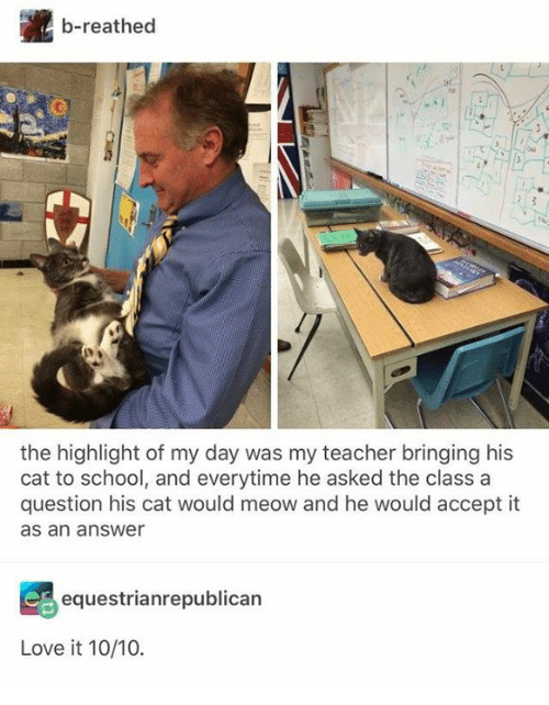 Love, School, and Teacher: b-reathed  the highlight of my day was my teacher bringing his  cat to school, and everytime he asked the class a  question his cat would meow and he would accept it  as an answer  equestrianrepublican  Love it 10/10