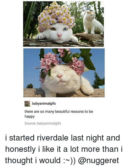 Beautiful, Memes, and Happy: baby animalgifs  there are so many beautiful reasons to be  happy  Source: babyanimalgifs i started riverdale last night and honestly i like it a lot more than i thought i would :~)) @nuggeret