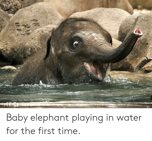 Baby Elephant Playing in Water for the First Time ...