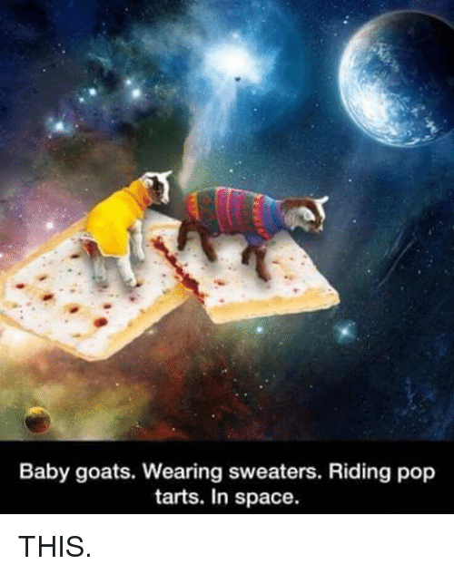 Baby Goats Wearing Sweaters Riding Pop Tarts in Space THIS
