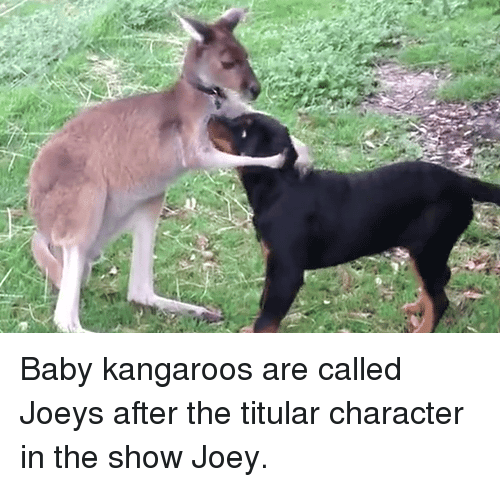 Baby Kangaroos Are Called Joeys After the Titular Character