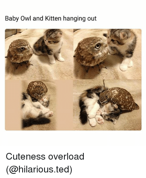 Funny, Ted, and Hilarious: Baby Owl and Kitten hanging out Cuteness overload (@hilarious.ted)