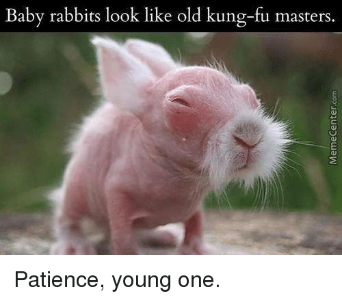 Memes, Masters, and Patience: Baby rabbits look like old kung-fu masters. Patience, young one.