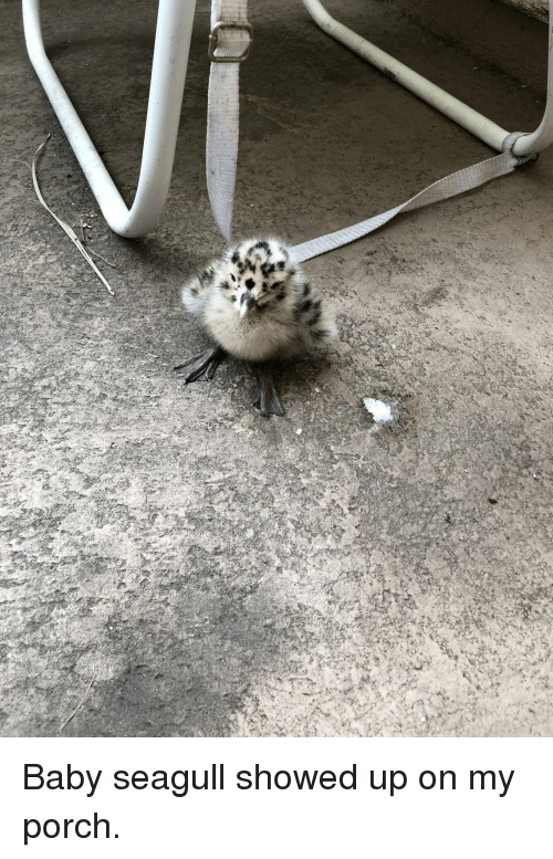 Baby Seagull Showed Up on My Porch | Baby Meme on ME ME