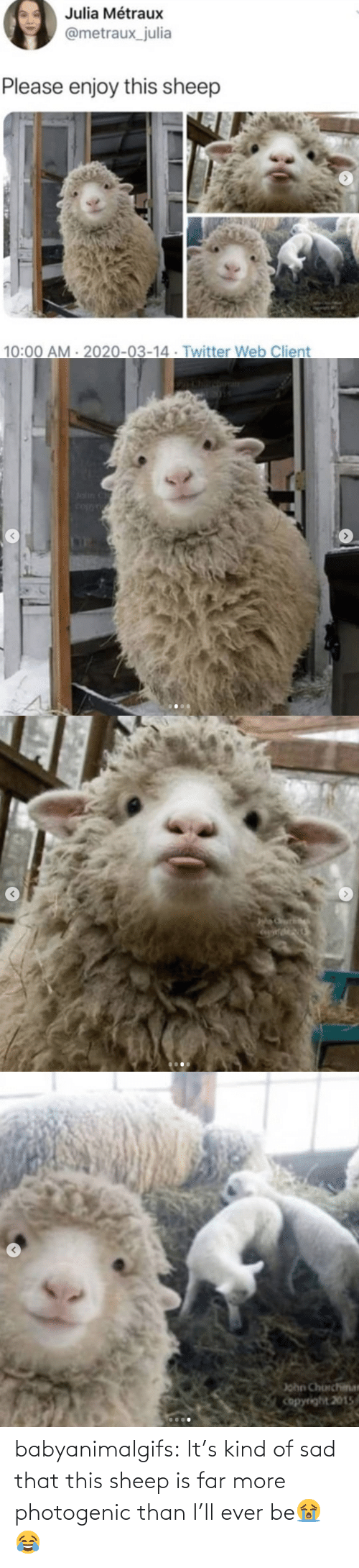 Target, Tumblr, and Blog: babyanimalgifs:  It's kind of sad that this sheep is far more photogenic than I'll ever be😭😂