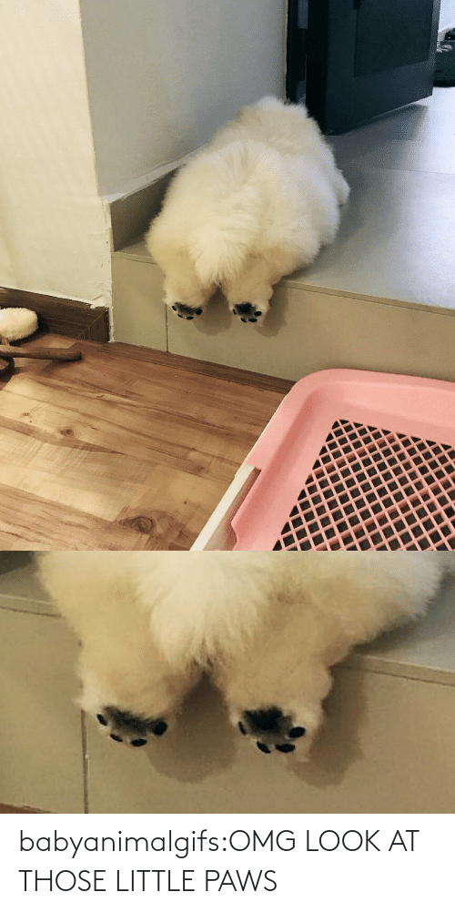 Omg, Target, and Tumblr: babyanimalgifs:OMG LOOK AT THOSE LITTLE PAWS