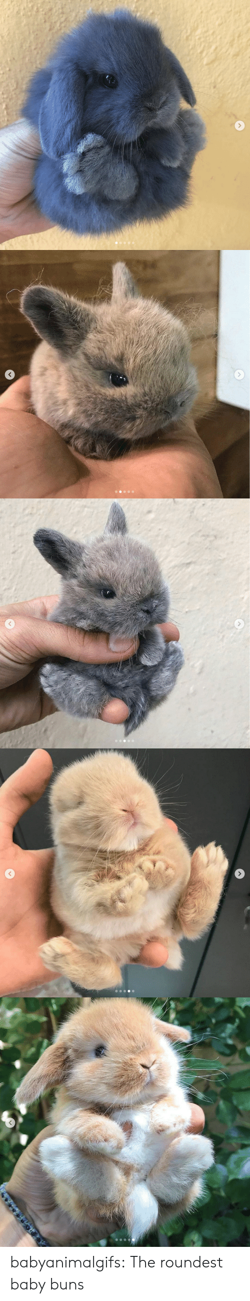 Tumblr, Blog, and Baby: babyanimalgifs:  The roundest baby buns