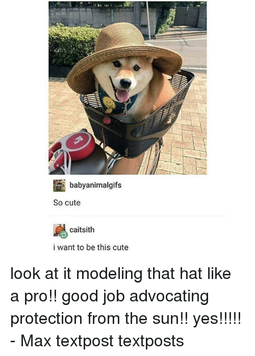Cute, Memes, and Good: babyanimalgits  So cute  caitsith  i want to be this cute look at it modeling that hat like a pro!! good job advocating protection from the sun!! yes!!!!! - Max textpost textposts