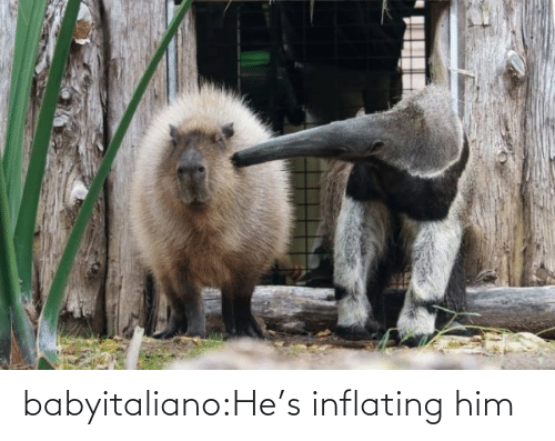Tumblr, Blog, and Com: babyitaliano:He's inflating him