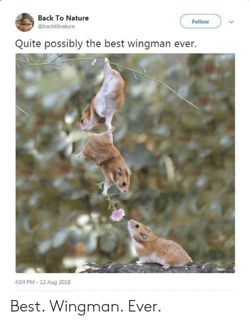 Best, Nature, and Quite: Back To Nature  @backtOnature  Follow  Quite possibly the best wingman ever.  4:04 PM - 12 Aug 2018 Best. Wingman. Ever.