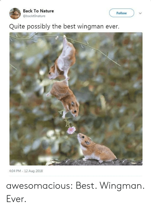 Tumblr, Best, and Blog: Back To Nature  @backtOnature  Follow  Quite possibly the best wingman ever.  4:04 PM - 12 Aug 2018 awesomacious:  Best. Wingman. Ever.