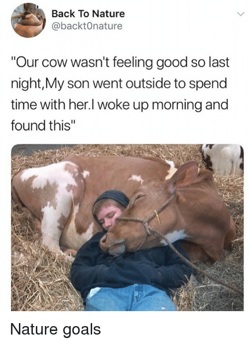 "Goals, Memes, and Good: Back To Nature  @backtOnature  ""Our cow wasn't feeling good so last  night,My son went outside to spend  time with her.l woke up morning and  found this"" Nature goals"