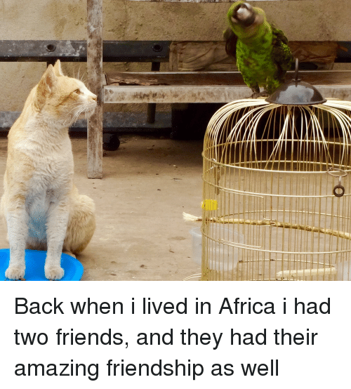 Africa, Friends, and Amazing