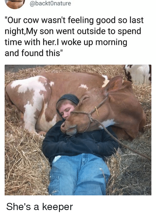 """Memes, Good, and Time: @backt0nature  """"Our cow wasn't feeling good so last  night,My son went outside to spend  time with her.l woke up morning  and found this"""" She's a keeper"""