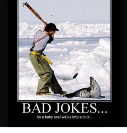 bad-jokes-so-a-baby-seal-walks-into-a-cl
