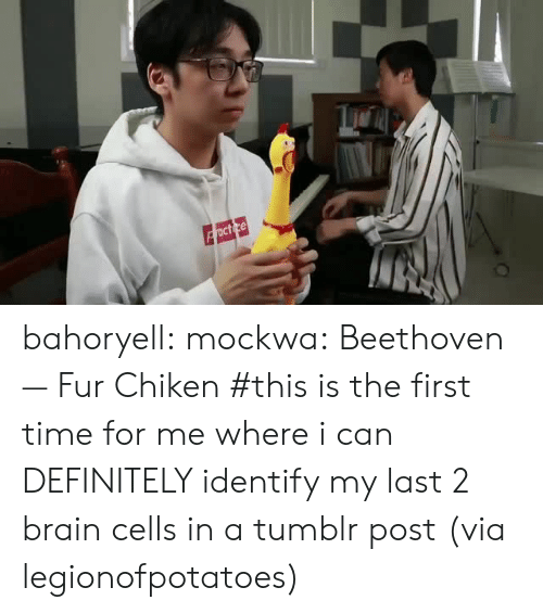 Definitely, Target, and Tumblr: bahoryell: mockwa: Beethoven — Fur Chiken #this is the first time for me where i can DEFINITELY identify my last 2 brain cells in a tumblr post (via legionofpotatoes)