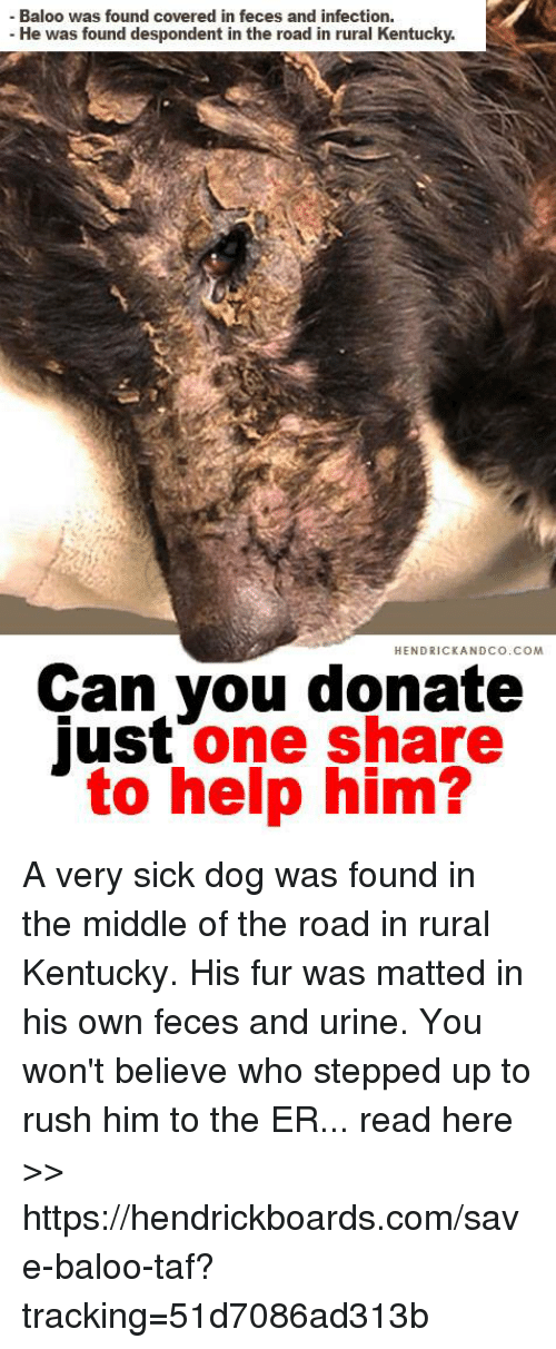 Memes, Help, and Kentucky: - Baloo was found covered in feces and infection.  -He was found despondent in the road in rural Kentucky.  HENDRICKANDCO.COM  Can you donate  just one share  to help him? A very sick dog was found in the middle of the road in rural Kentucky. His fur was matted in his own feces and urine. You won't believe who stepped up to rush him to the ER... read here  >> https://hendrickboards.com/save-baloo-taf?tracking=51d7086ad313b