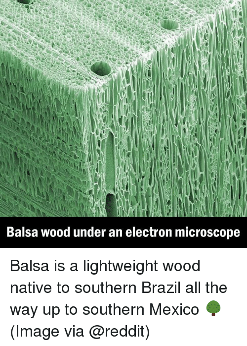 Memes, Reddit, and Brazil: Balsa wood under an electron microscope Balsa is a lightweight wood native to southern Brazil all the way up to southern Mexico 🌳 (Image via @reddit)