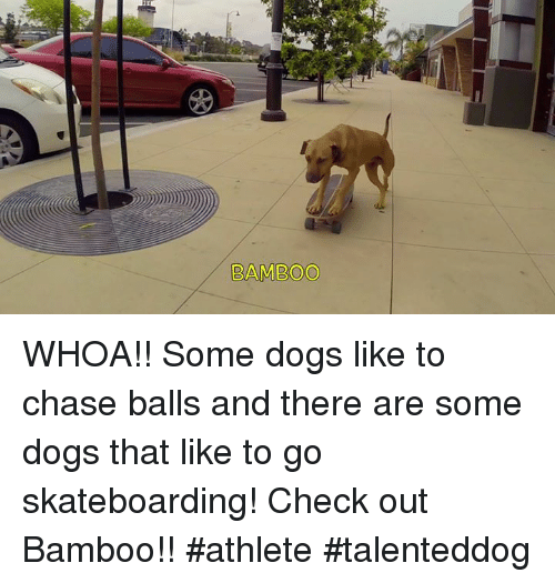 bamboo whoa some dogs like to chase balls and there 4632915 ✅ 25 best memes about skateboarding skateboarding memes