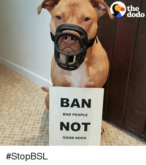 to ban or not to ban Define ban: curse to prohibit especially by legal means also : to prohibit the use, performance, or distribution of bar ban in a sentence.